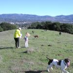 Top of Westwood Hills. With cows