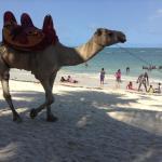 CAMEL BACK RIDES