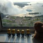 Mignons love the view