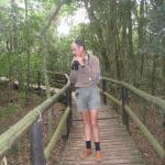 Dlinza forest boardwalk