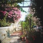 Hotel Corona- Italy Ischia Foto