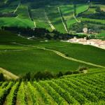 Borgo Conde Wine Resort