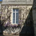 wisteria on side of chateau