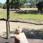 watching the Elephants from the room patio
