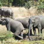 Elephants in the watering hole