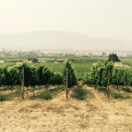 Moon Curser Vineyards Foto