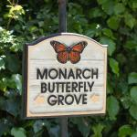 Monarch Butterfly Grove Onsite