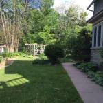 Our garden - summer 2015