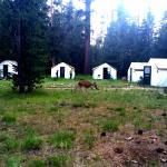 Tents at Merced Lake
