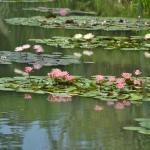 夏季の見どころ『花の美術館』印象派の絵の中に佇んでいるかのような場所です。(7月)