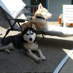 Kaya and Meeko sun and shade bathing