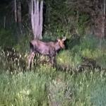 Photo de Pemi Valley Moose Tours