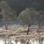The wetland in winter
