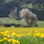 Kerschbaumhof Foto