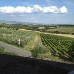 Vineyards and surroundings