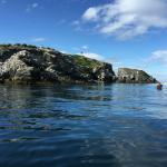 First sea kayaking : around the Rookery -- gulls, murres, puffins, eagles, sea lions, otters --