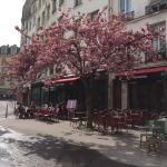 Le petit café avec les cerisiers japonais en fleurs