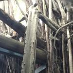 安平樹屋4