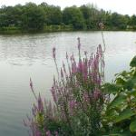 view from the pond