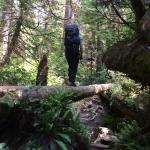 Amazing forest trail.  Good balance is a requirement here! :))