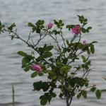 Dainty flowers at water's edge