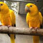 Birds Research Center & Resort