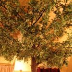 Under the tree )