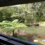 Foto de Possum Valley Rainforest Cottages