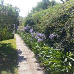 Walk to pool with beautiful Agapanthus