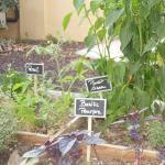 Un enchantement le jardin aromatique typiquement méditerranéen. Bravo les jardiniers.