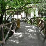 The jungle bridge