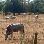 Photo of Agriturismo Guendalina