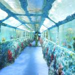 В туннеле (аквариумы над головой)
