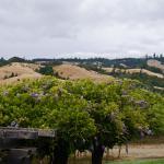 Navarro Vineyard & Winery