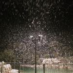 Beautiful photos of it snowing on Friday night