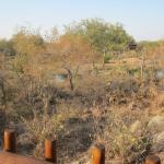 Foto de Kruger Adventure Lodge