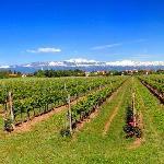 Una veduta di alcune delle nostre vigne