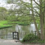 Bunbury Mill pond