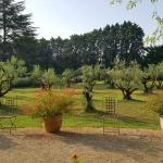 The Olive Grove in front of the hotel