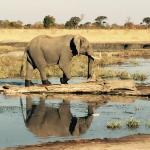 A few pics from our recent trip to Hwange...