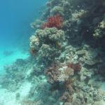 New Son Bijou Diving Center Image