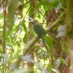 Foto de Quetzal Valley Cabins