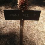 Foto di Grant Grove Restaurant