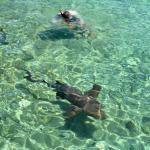 Peter mit den Ammenhaien