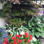 Ready for Upton in bloom��