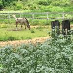 Horse farm near covered bridges
