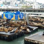 P39 World Famous Sea Lions
