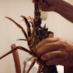 Crudi di sapienza e linguina all aragosta rigorosamente in rame.