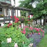Vitalhotel am Stadtpark, Blick in den Garten