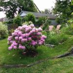 Lovely garden at Rothesay House